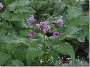 2014_0610_165715-IMGP3221